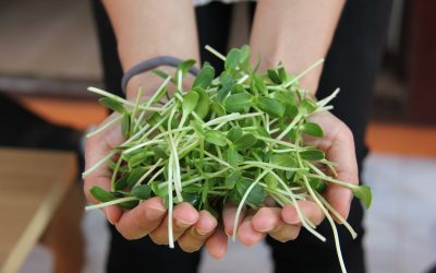 Microgreens: a tiny, nutritional, easy-to-grow crop all year