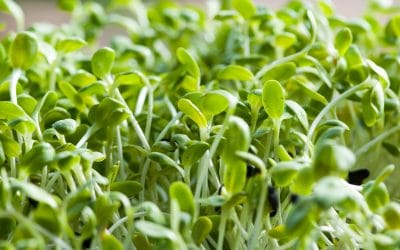 What Are The Best Plants To Grow As Microgreens
