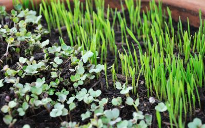 How Much Does It Cost To Start A Microgreen Business